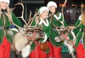 Reindeer and Elf display team on hire
